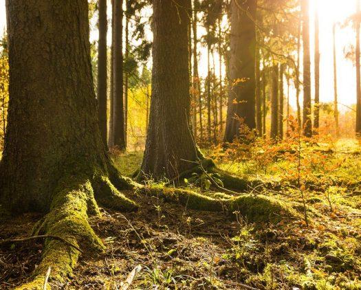 L'importance des Arbres dans les Réserves Naturelles