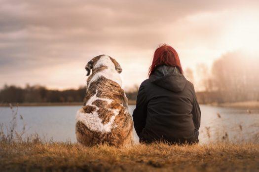 Saint Valentin – Offrir une parcelle à votre animal de compagnie ?