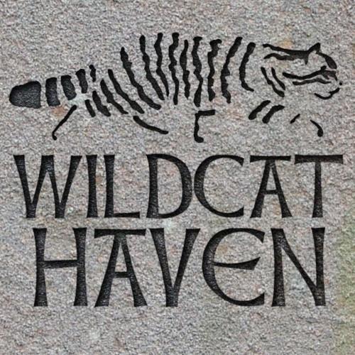 Le sauvetage de deux chatons sauvages écossais offre une avancée majeure pour les espèces sauvages