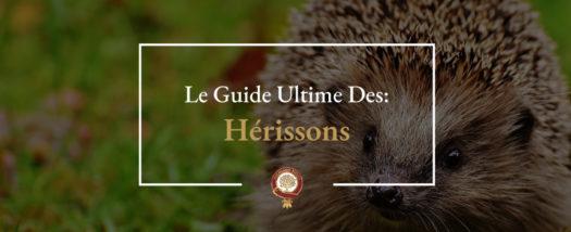 Guide du Hérisson