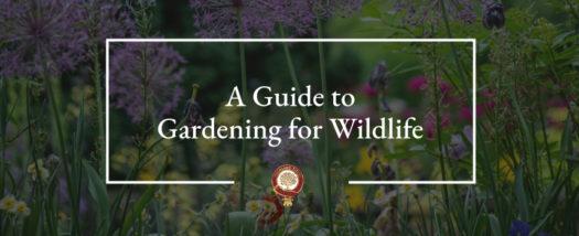 Jardiner pour la Biodiversité