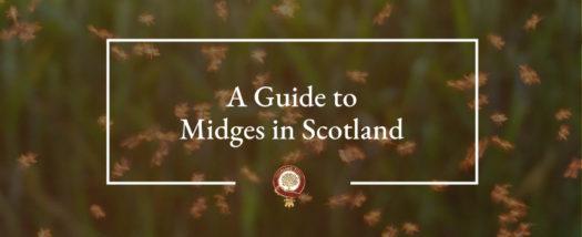 SOS Midges en Écosse !